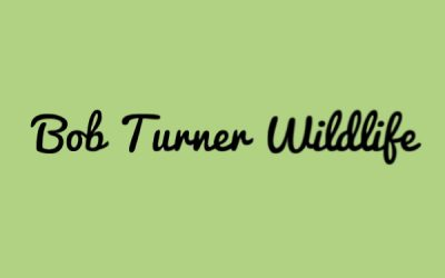 Bob Turner Wildlife
